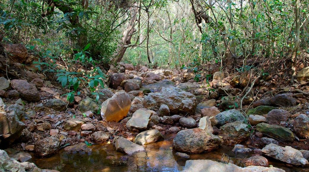 Lago Arambol Sweet Water caracterizando floresta tropical e um rio ou córrego