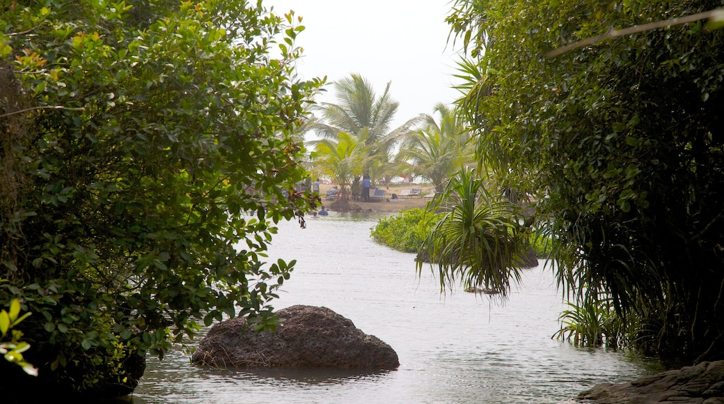 Lago Arambol Sweet Water mostrando um lago ou charco