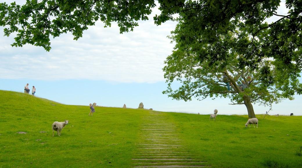 Lindholm Høje og byder på venlige dyr og landbrugsområde