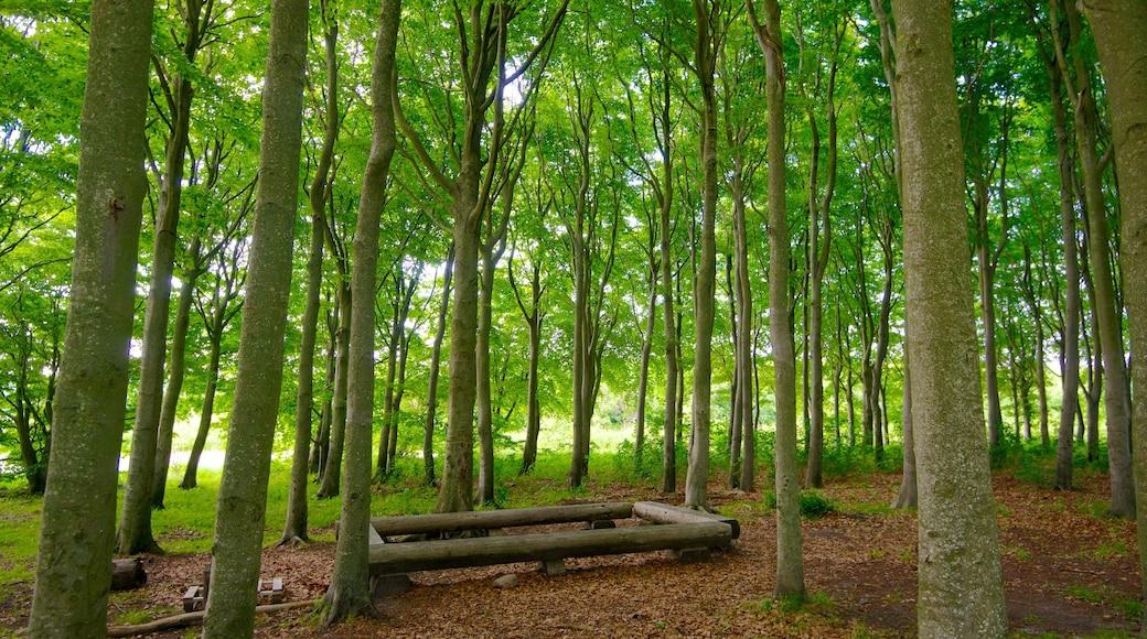 Lindholm Høje og byder på skove