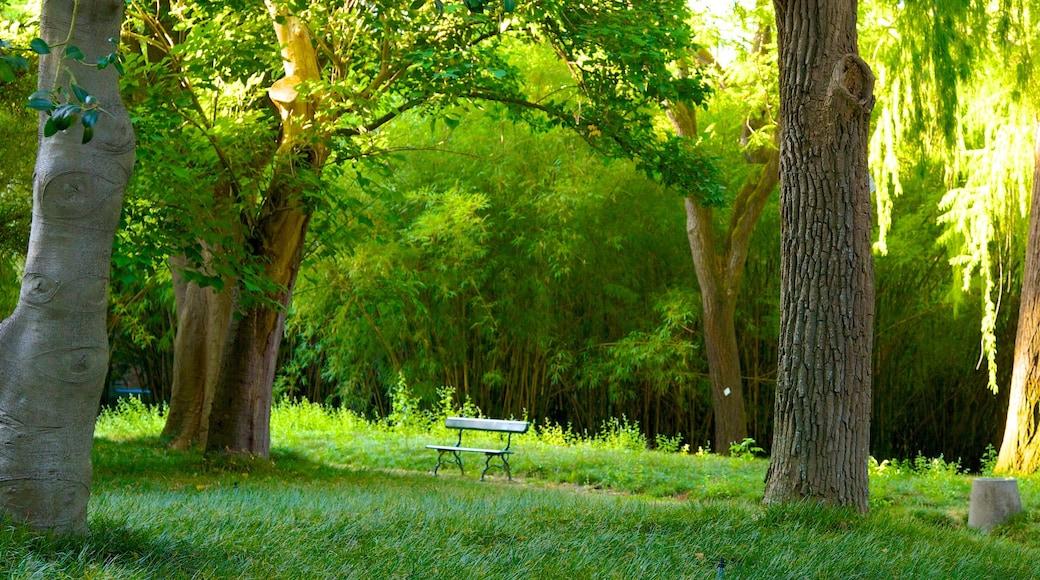 Giardini botanici che include parco