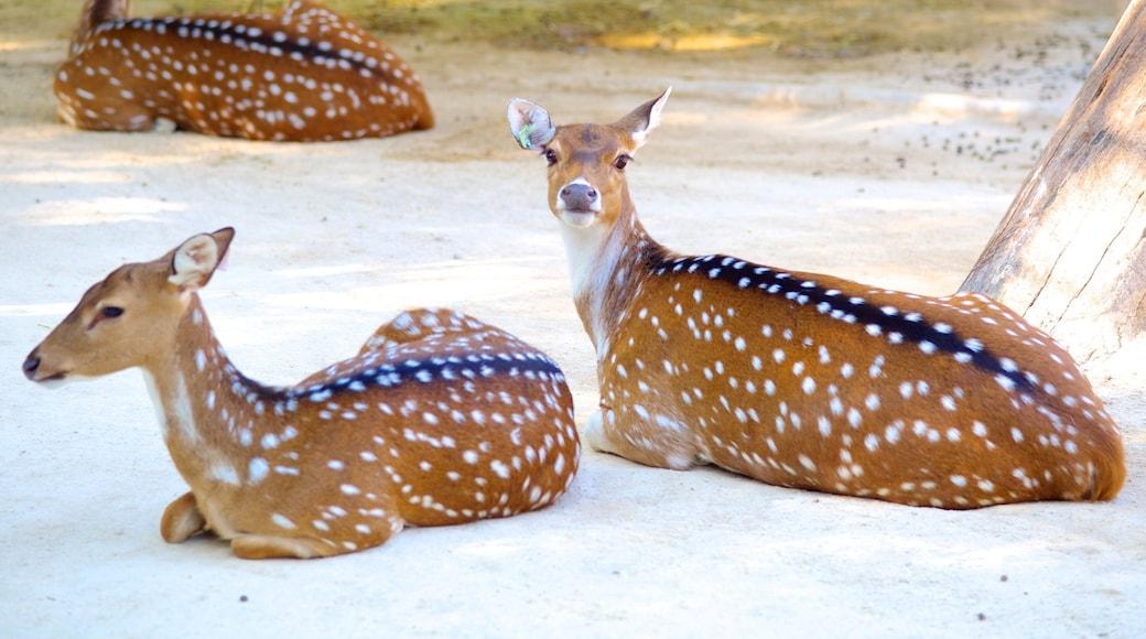 里斯本動物園 设有 動物園裡的動物 和 陸上動物