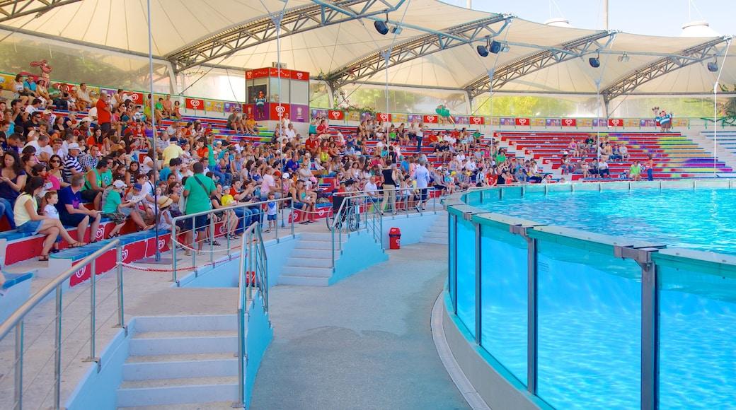 里斯本動物園 设有 動物園裡的動物 以及 一大群人