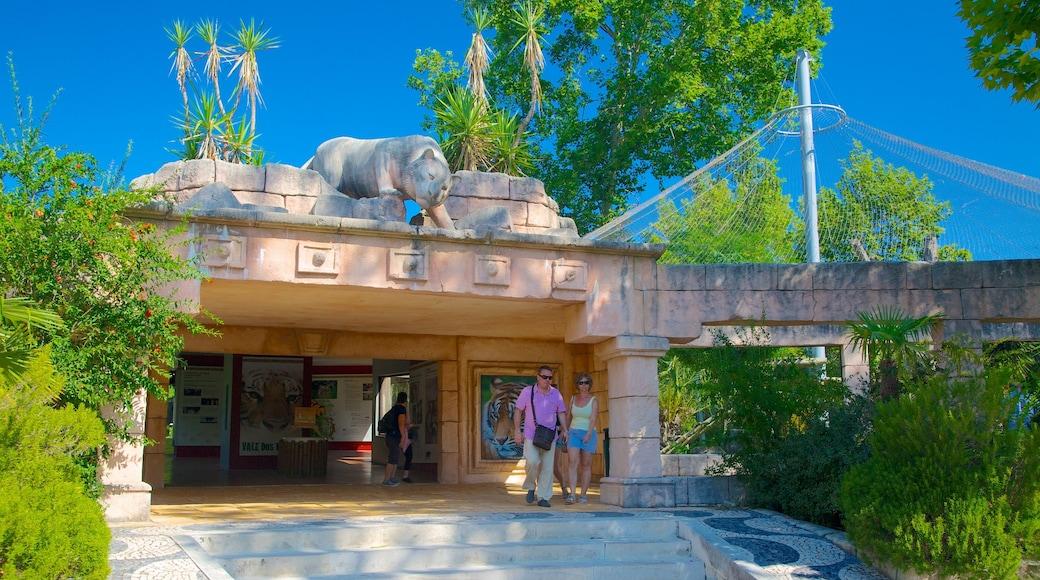 里斯本動物園 其中包括 動物園裡的動物 以及 一對夫婦