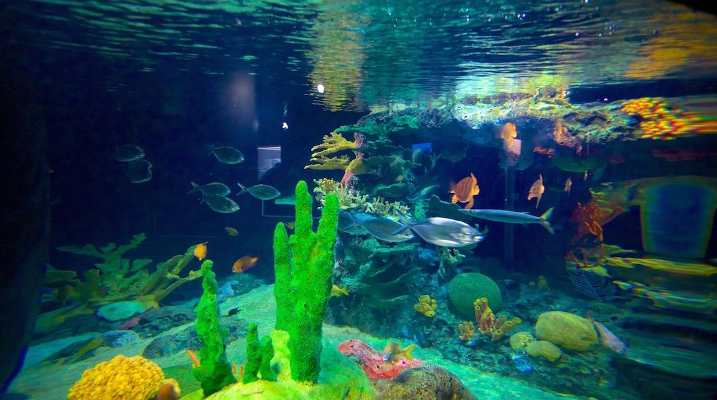 Lisbon Oceanarium showing marine life