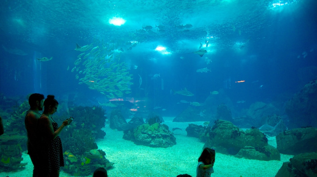 Lisbon Oceanarium showing marine life and interior views as well as a couple