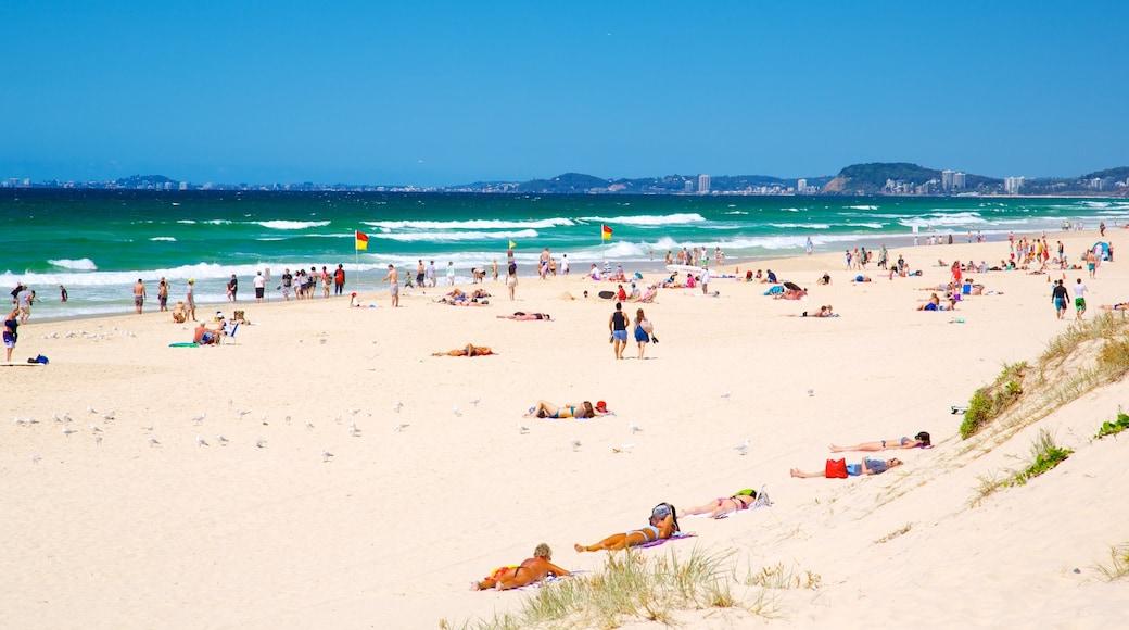 Surfers Paradise Beach featuring general coastal views and a beach