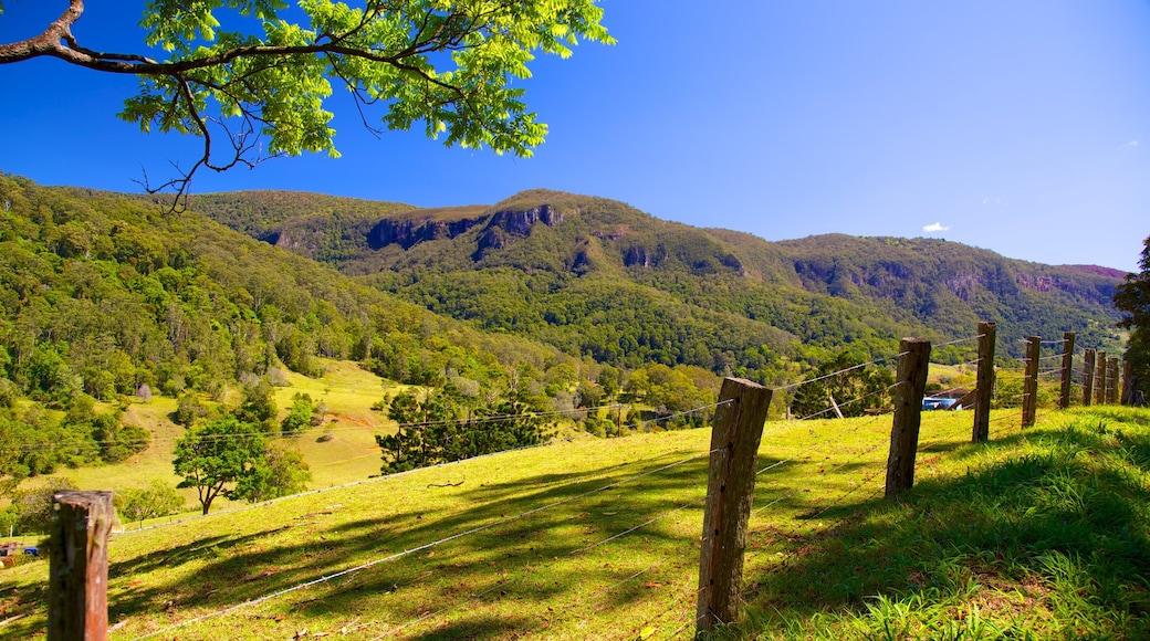 Parque Nacional Springbrook mostrando escenas tranquilas, vista panorámica y un parque