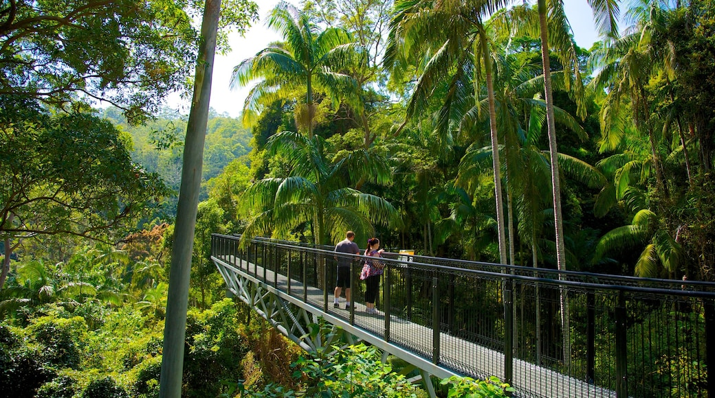 Mount Tamborine featuring tropical scenes, a suspension bridge or treetop walkway and forests
