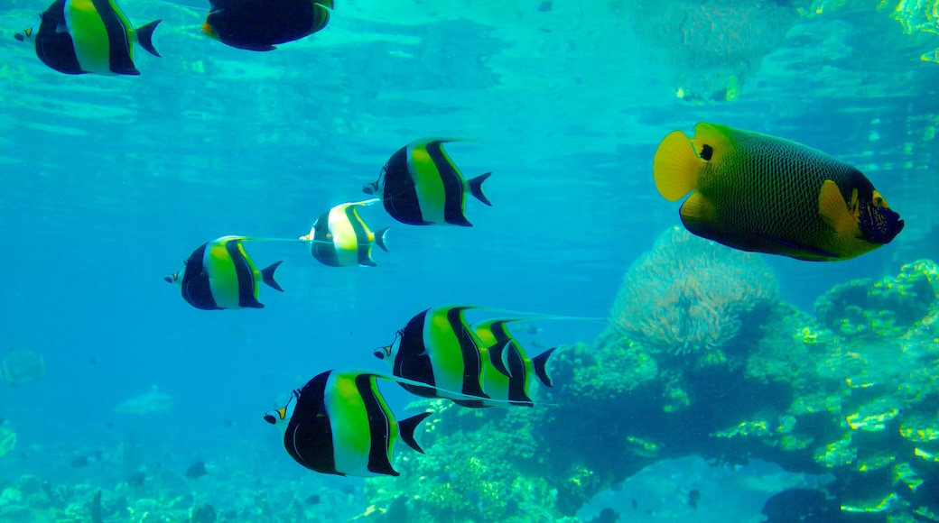 Sea World featuring colorful reefs and marine life