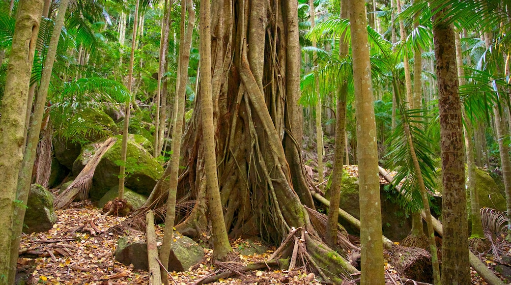 Tamborine National Park Palm Grove Section featuring forests