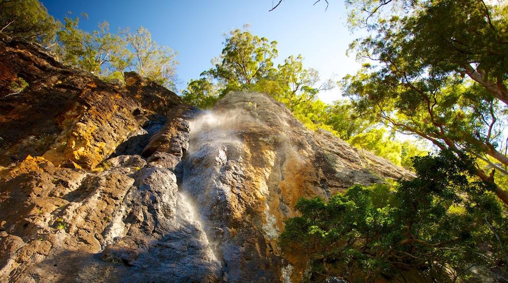 Parque Nacional Springbrook mostrando vista panorámica