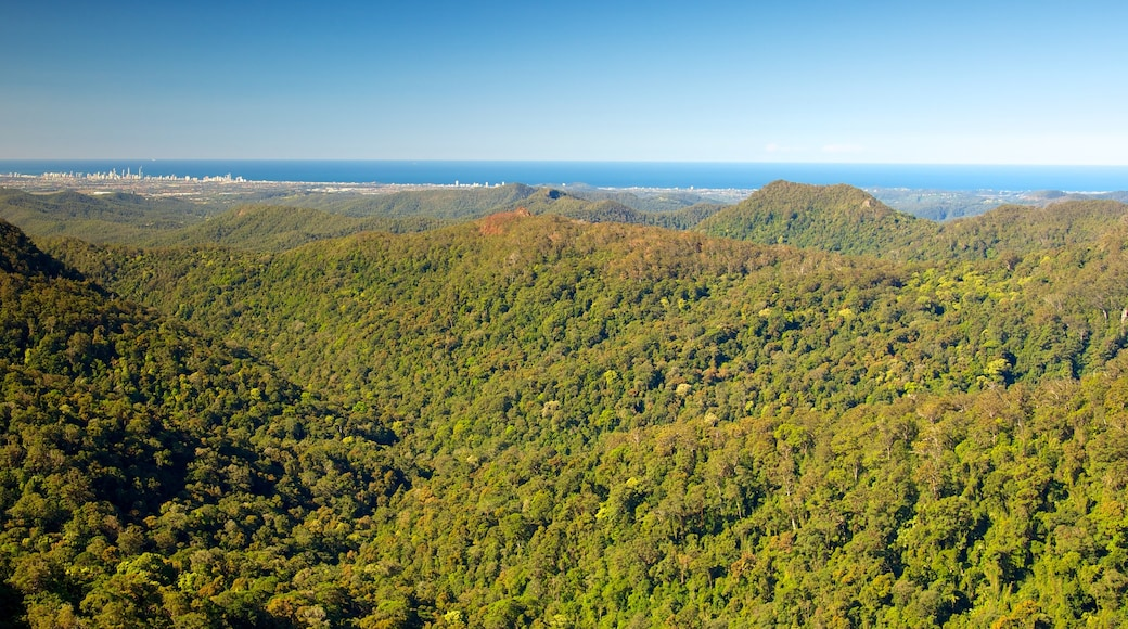 Springbrook National Park showing forest scenes