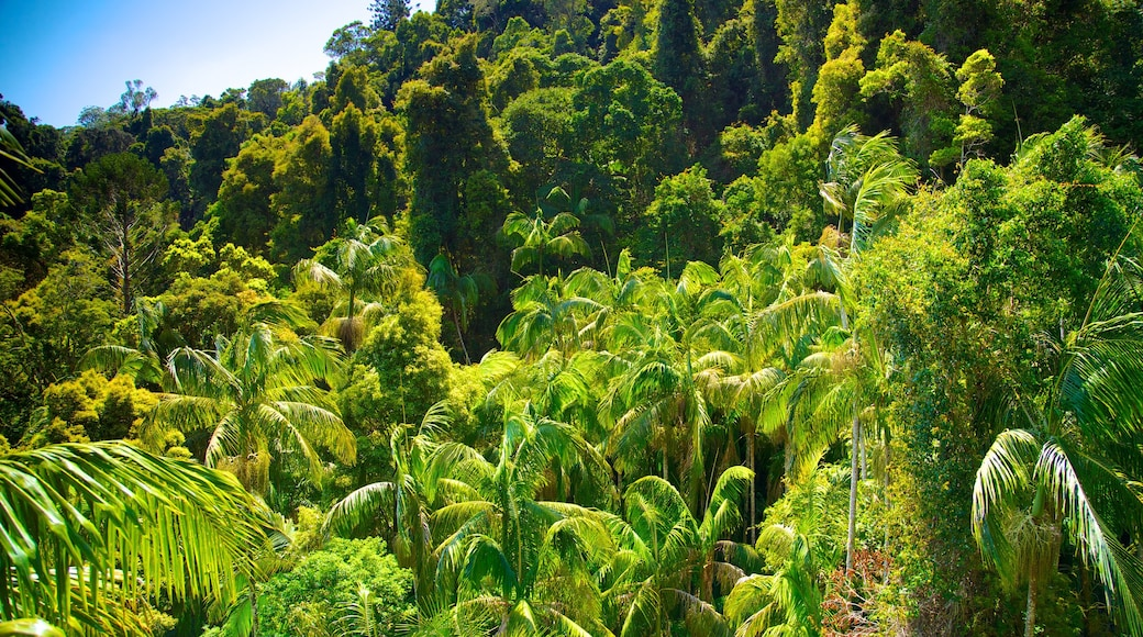 Mount Tamborine which includes rainforest