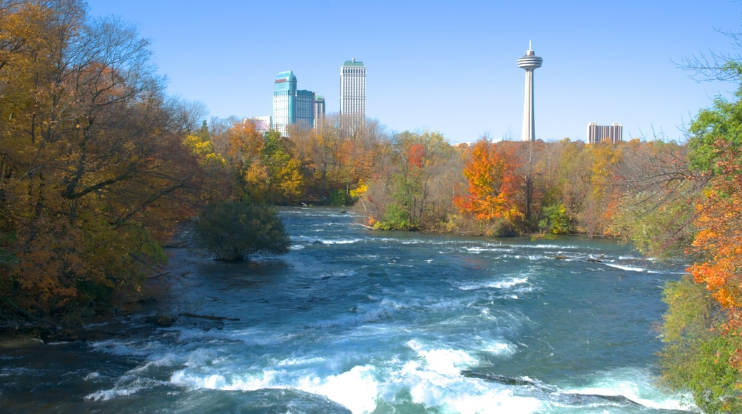 Skylon Tower featuring forests, autumn colours and rapids