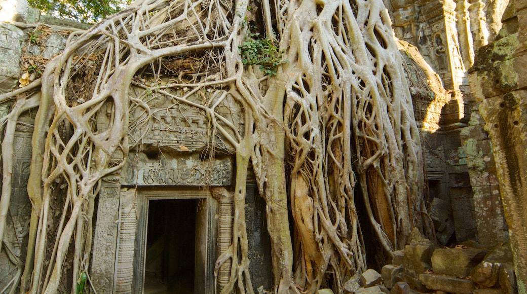 Tempio di Ta Prohm mostrando tempio o luogo di culto, elementi religiosi e paesaggio forestale