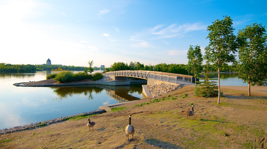 Wascana Park featuring landscape views, a lake or waterhole and bird life