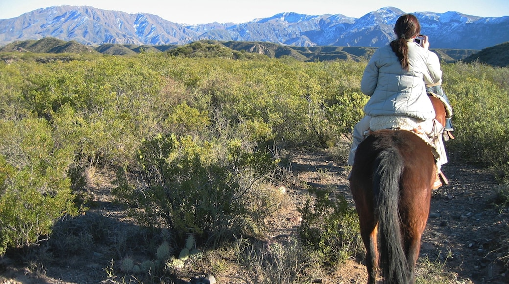 Mendoza Wine Region which includes horseriding, mountains and land animals