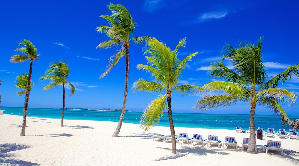 Cable Beach que incluye una playa de arena y escenas tropicales