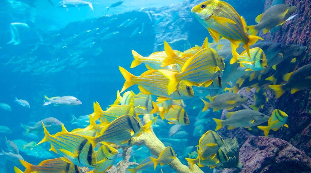 Acuario Atlantis ofreciendo vida marina