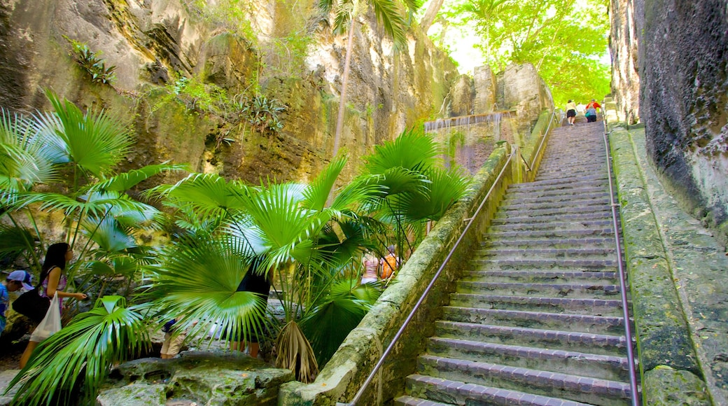 Queen\'s Staircase which includes rainforest