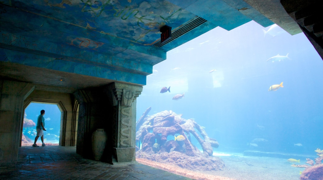 Atlantis Aquarium which includes marine life, interior views and colourful reefs