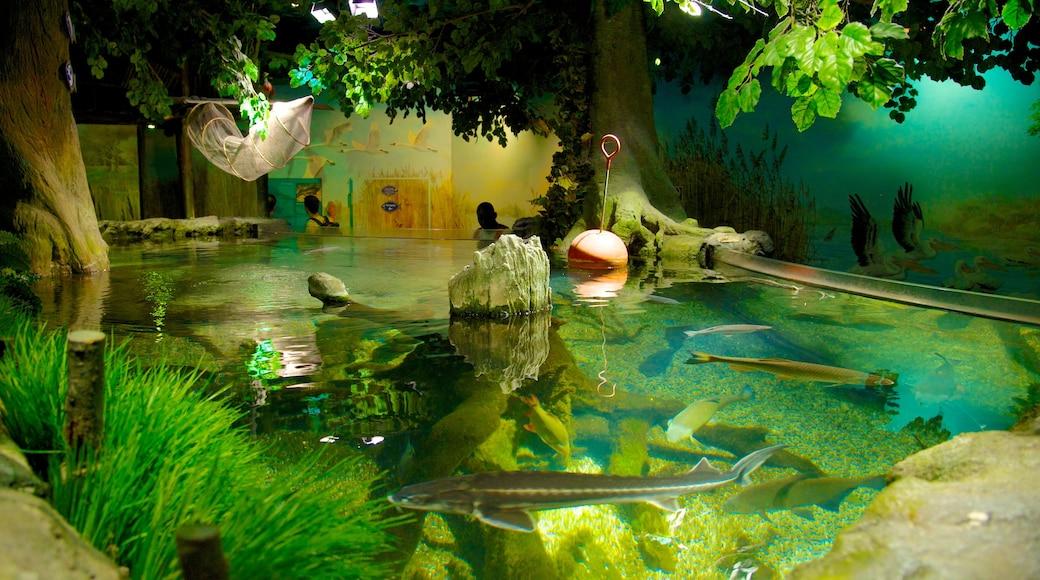 Sea Life Aquarium mit einem Meeresbewohner und Innenansichten