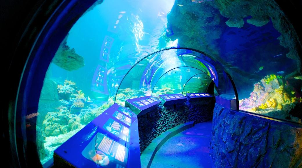 Sea Life Aquarium welches beinhaltet Innenansichten und Meeresbewohner