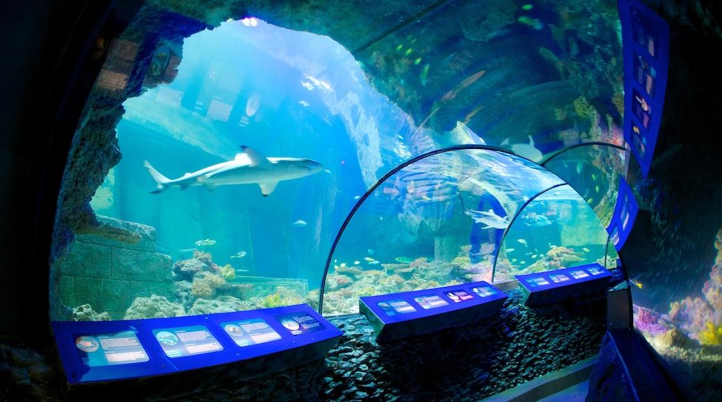 Sea Life Aquarium welches beinhaltet Meeresbewohner und Innenansichten