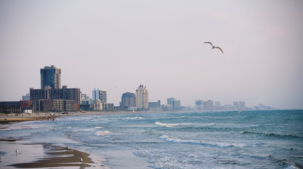 South Padre Island featuring bird life, a skyscraper and general coastal views