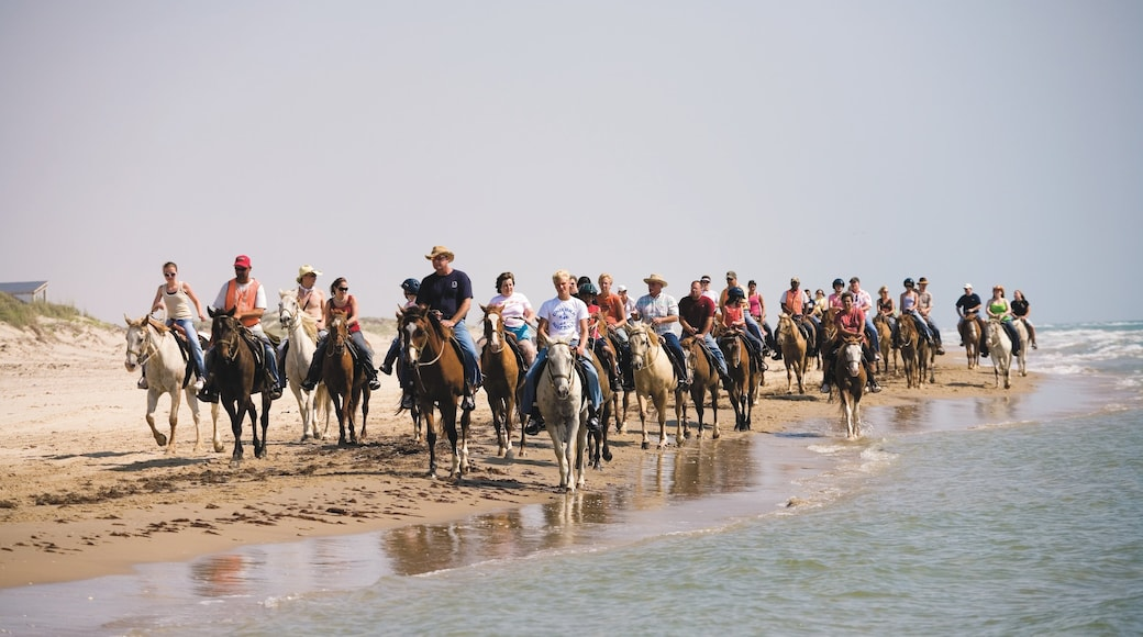 South Padre Island which includes land animals, horseriding and a sandy beach