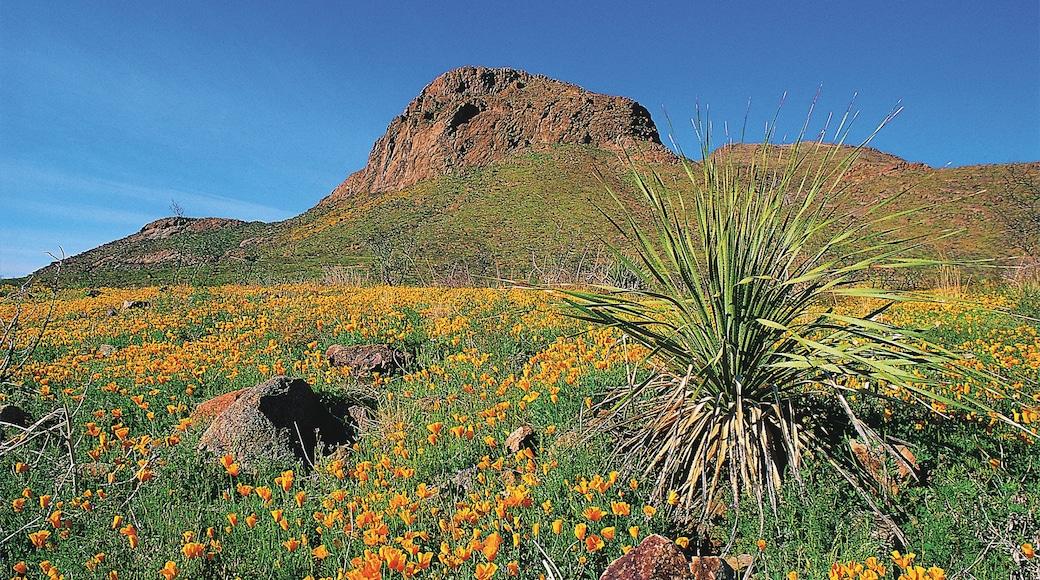 엘 파소 이 포함 산 과 야생화