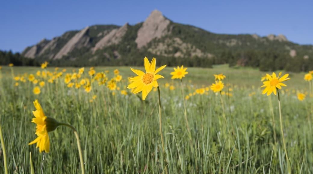 Boulder qui includes montagnes, scènes tranquilles et fleurs