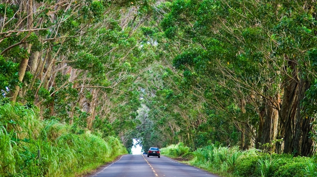 Koloa showing forests and touring