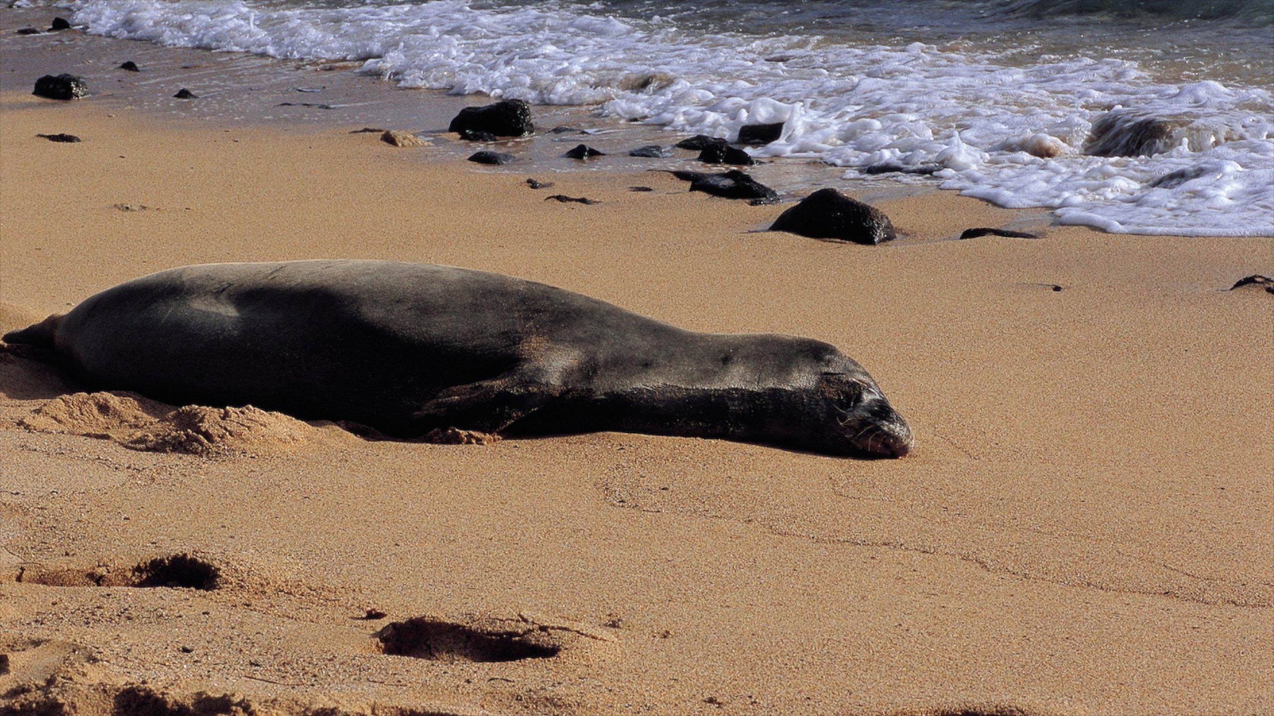 Poipu Beach Estates, Koloa, Hawaii, United States of America