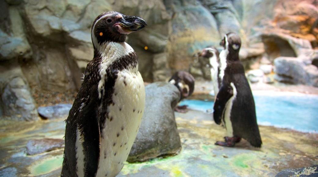 Aquarium of Niagara which includes marine life and bird life