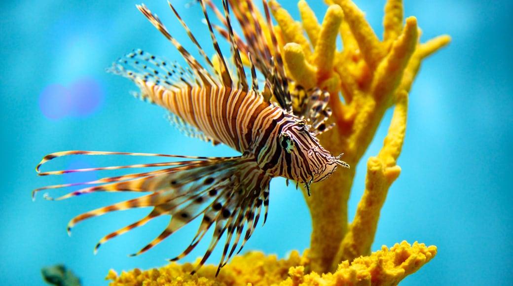 Aquarium of Niagara showing marine life and coral