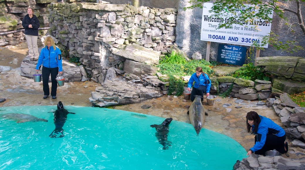 Aquarium of Niagara showing marine life as well as a small group of people