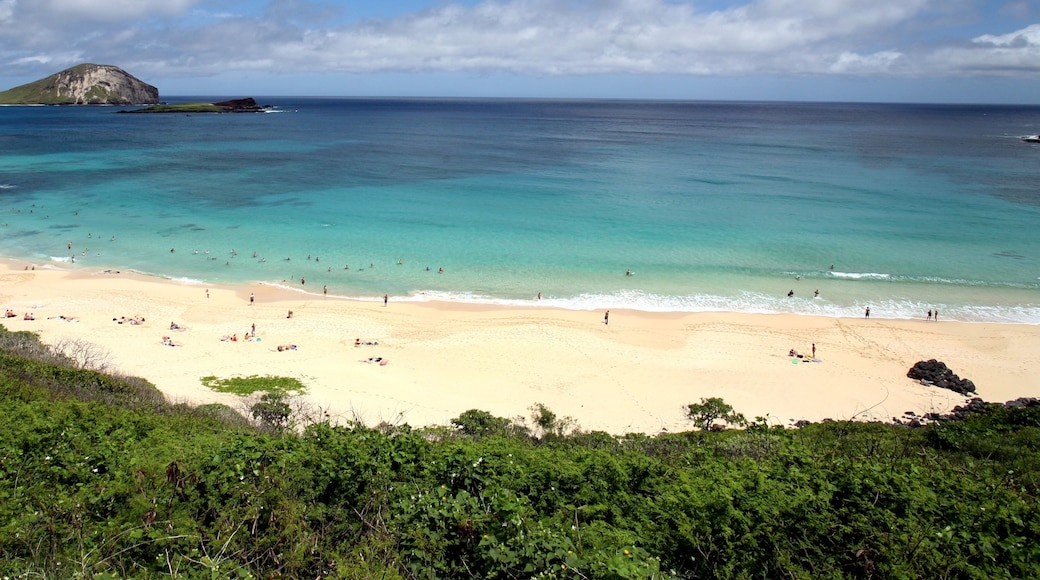 Makapuu Beach Park showing landscape views, a beach and tropical scenes