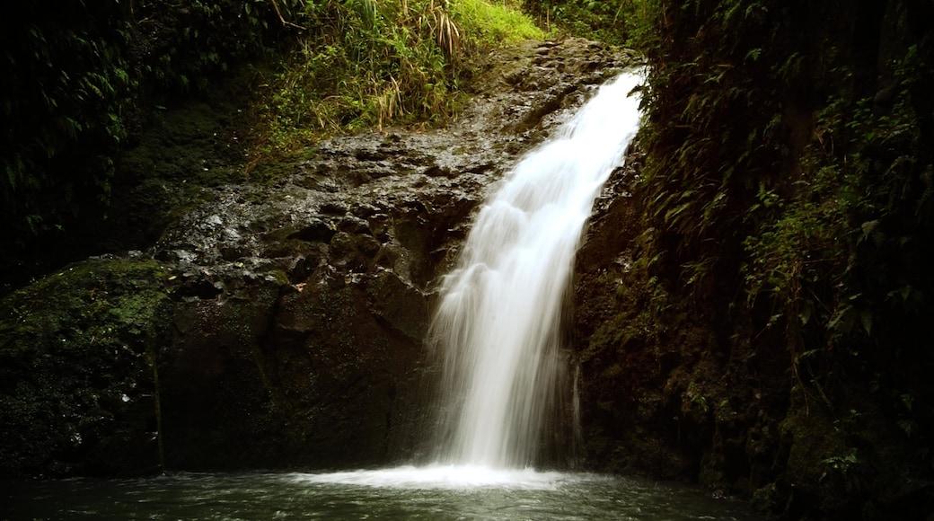 Waimea Falls Park showing landscape views and a cascade