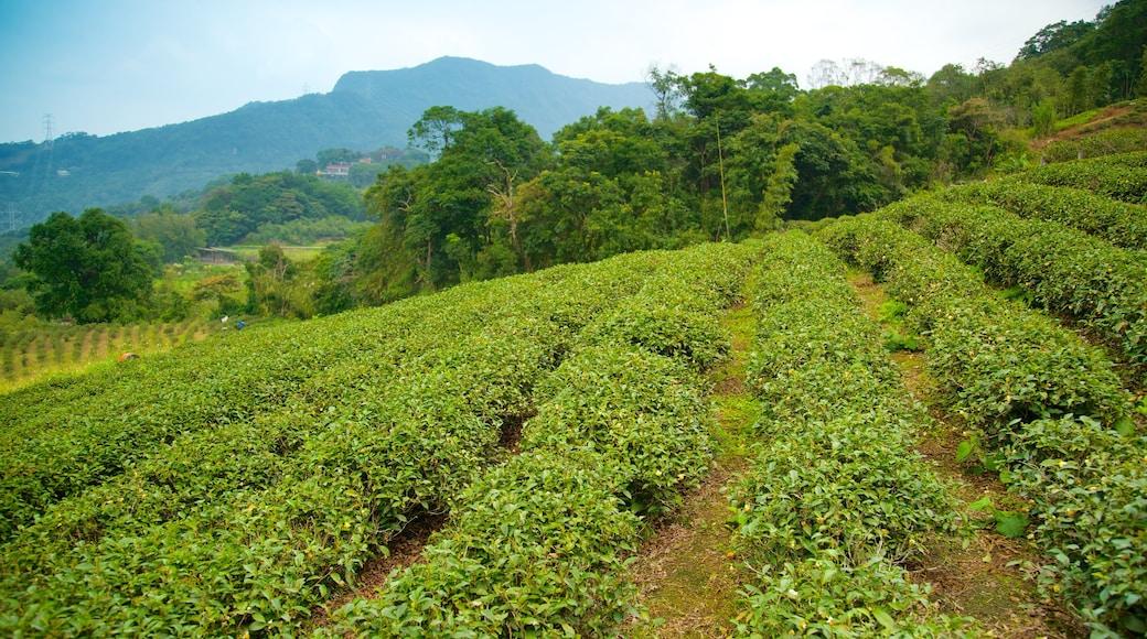 台北 呈现出 農地, 山水美景 和 山