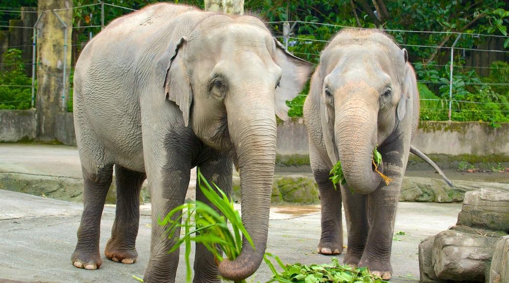台北市立動物園 设有 動物園裡的動物 和 陸上動物