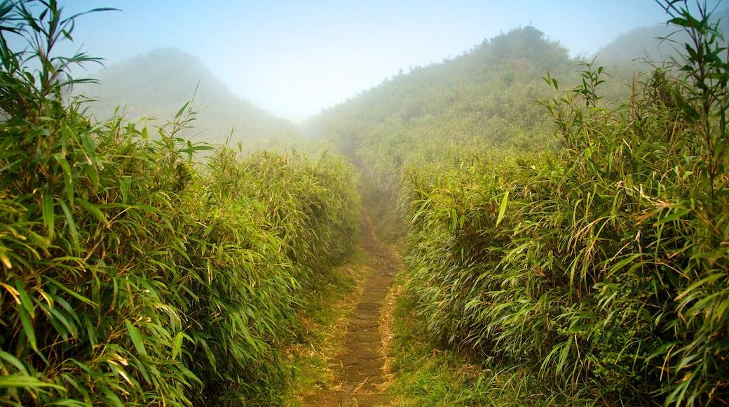 Yangmingshan Nationalpark das einen Nebel und Landschaften
