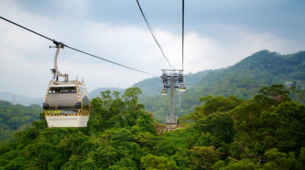 Maokong Gondola เนื้อเรื่องที่ กอนโดลา และ ป่าฝน