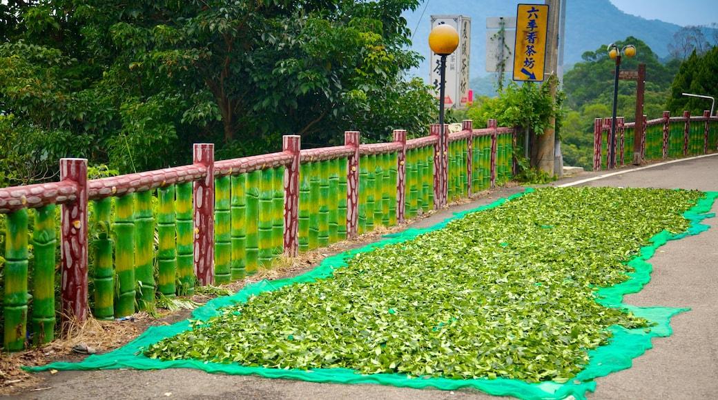 台北 呈现出 花園