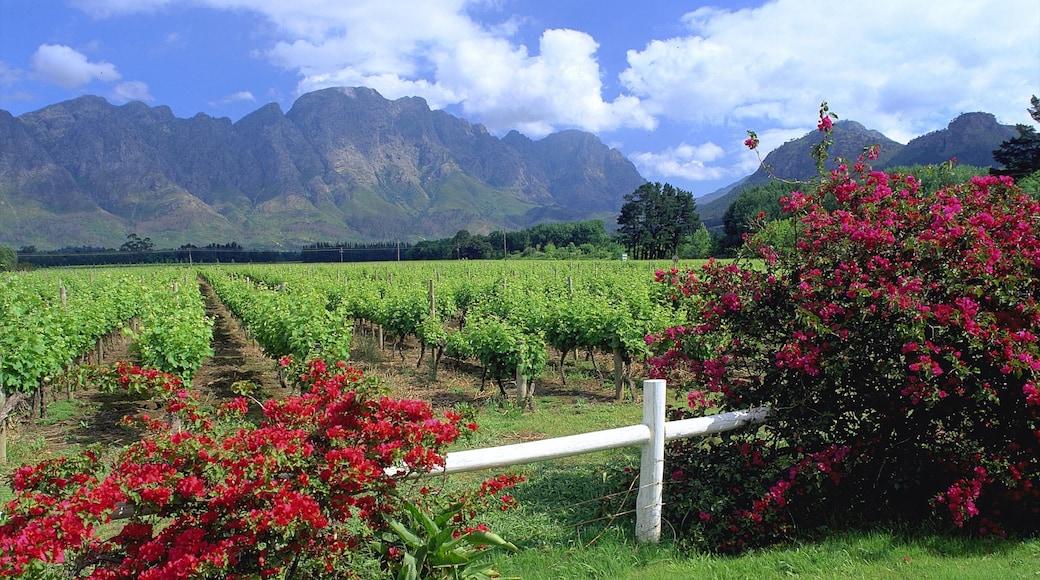 Franschhoek welches beinhaltet Blumen, Farmland und Landschaften