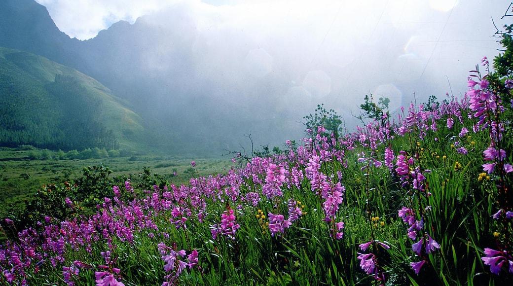 Stellenbosch som inkluderar dimma, landskap och blommor
