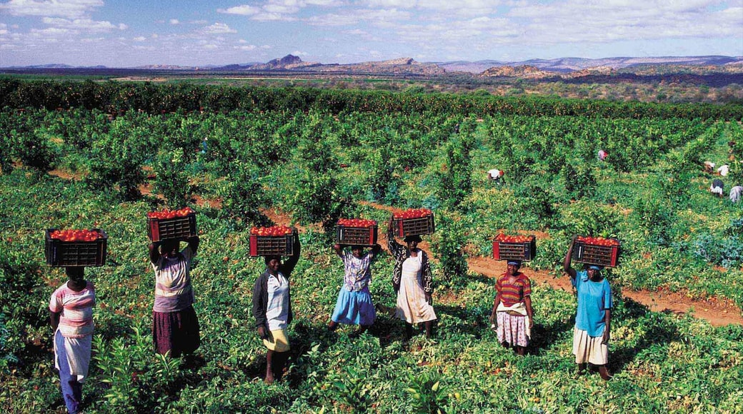 Musina featuring indigenous culture, farmland and landscape views