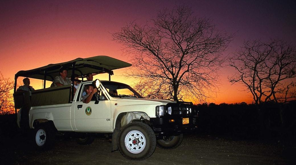 Krüger-Nationalpark mit einem Sonnenuntergang, Safari-Abenteuer und Autotour