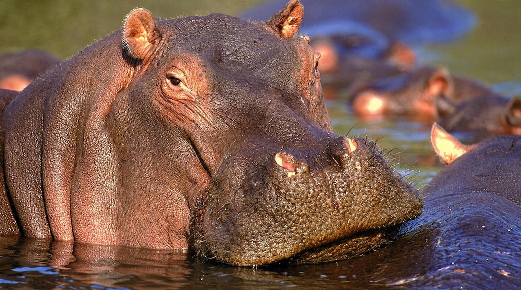 Krüger-Nationalpark das einen Landtiere, gefährliche Tiere und Zootiere